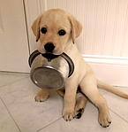 Производство корма для домашних животных. Оборудование для производства корма для домашних животных.