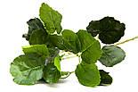 Штучна гілочка Полисциас, 67 см, зелений (631635), фото 2