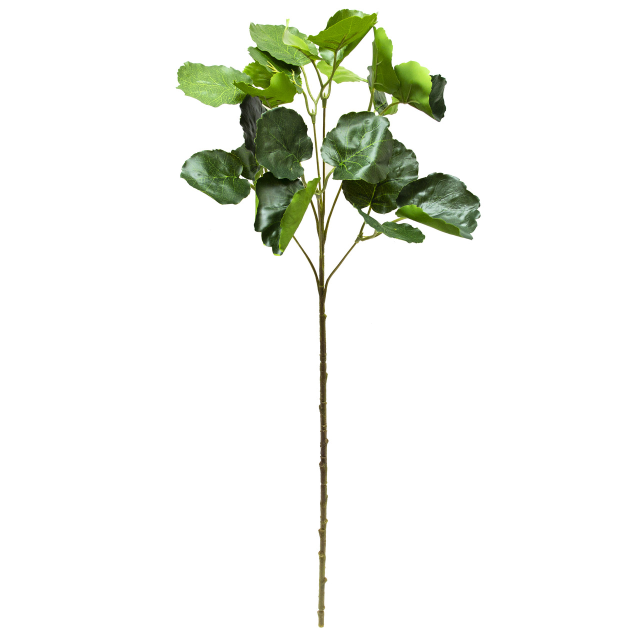 Штучна гілочка Полисциас, 67 см, зелений (631635)
