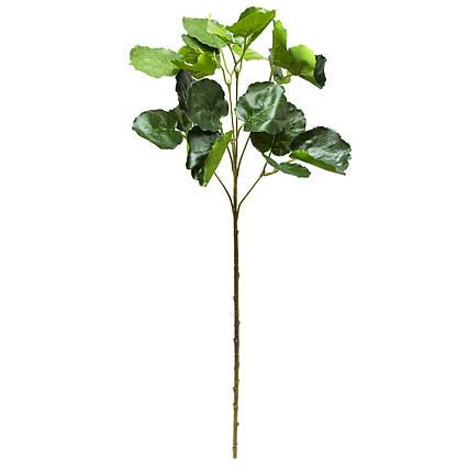 Искусственная веточка Полисциас, 67 см, зеленый (631635)