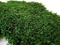 Стабілізований плоский мох зеленого кольору 1 кг, фото 1