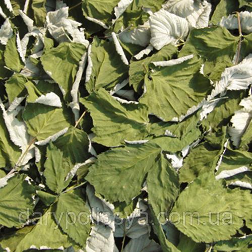 Ожина сиза листя (Ежевика сизая листья),  50г