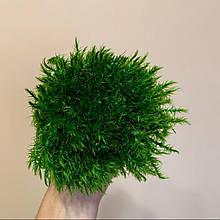 """Мох """"Прованс Королівський"""" стабілізований зеленого кольору."""