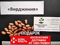 """Арахис сорт """"Вирджиния"""" семена (20 шт) земляной орех семена на посадку насіння арахіс земляний горіх, фото 1"""