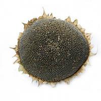 Семена подсолнечника AS 35112 KL