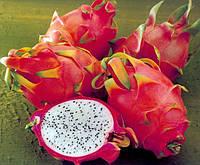 Питайя - плодоносящий кактус  семена