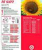 Семена подсолнечника ЛГ 5377, фото 2