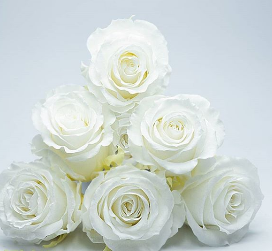 Стабілізована троянда біла, 6 шт упаковка