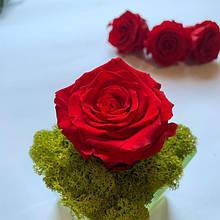 Стабілізована троянда червона, упаковка 6 шт