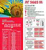 Семена подсолнечника ЛГ 5665 М (LG 5665 M), фото 2