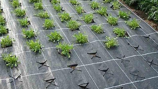 Агроволокно для бетона виброгладилка для бетона купить