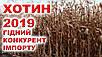 Кукурудза ДБ Хотин, фото 4