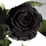 Три долгосвежих розы Черный Бриллиант 7 карат (короткий стебель), фото 2