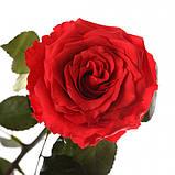 Три долгосвежих розы Красный Рубин 7 карат (короткий стебель), фото 2