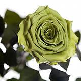 Три долгосвежих розы Лаймовый Нефрит 7 карат (средний стебель), фото 2