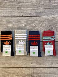 Жіночі шкарпетки короткі бавовна Montebello з листком марихуани і смужками 35-40 12 шт в уп мікс 4 кольорів