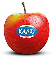 Яблуко, яке своїм смаком здивувало весь світ та дивує до сьогодні!