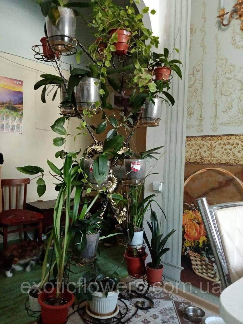 """Підставка для квітів на 22 чаші """"Римська підлогова"""""""
