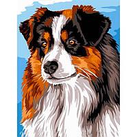 Картина раскраска по номерам на холсте 30*40см Babylon VK241 Австралийская овчарка