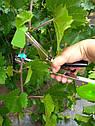 Професійний степлер (тапенер) Sujineng для підв'язки винограду, малини, квітів, фото 2