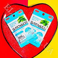 Колеус форсколин / Coleus forskohlii Япония! Daiso
