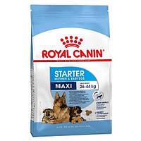 Сухой корм Royal Canin Maxi Starter для кормящих собак крупных пород, 4 кг