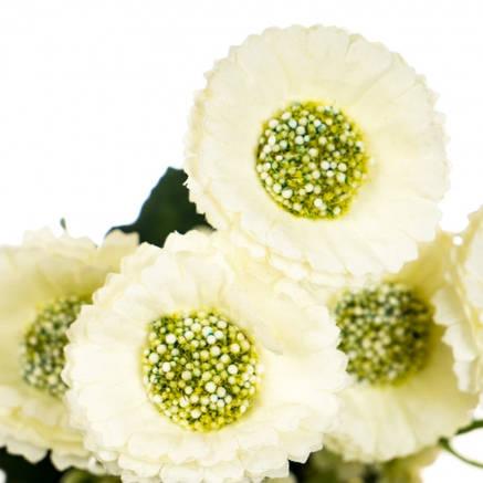 """Цветочный букет """"Белый снег"""", фото 2"""