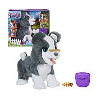 Интерактивная игрушка Hasbro FurReal Friends Щенок Рикки Серая (RI0292)