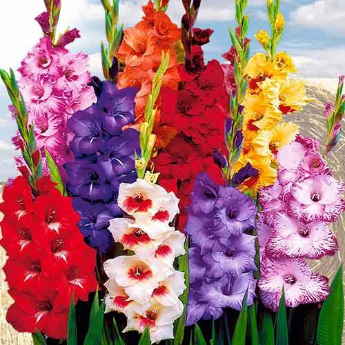 Луковицы и клубни цветов ВЕСНА-2021