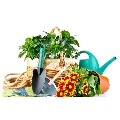 🏡 Дача, сад и огород