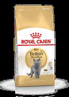 ROYAL CANIN British Shorthair 34 2 кг Роял Канін для британських короткошерстих кішок
