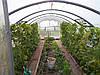 Теплицы садовые, фото 8