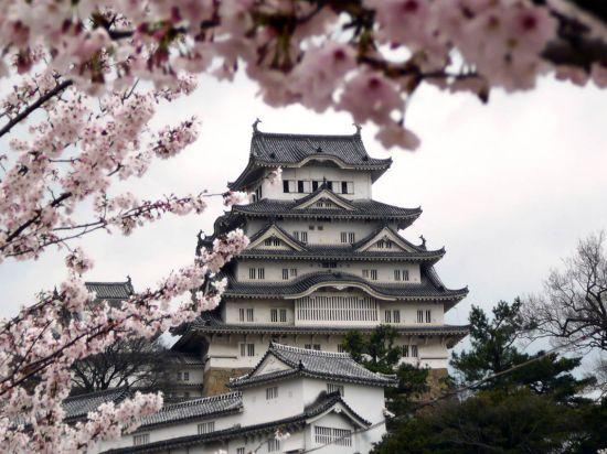 Фотообои 3Д сакура в японском стиле разные текстуры , индивидуальный размер