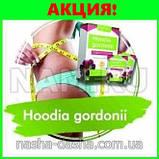 Порошок для похудения Hoodia Gordonii , фото 2