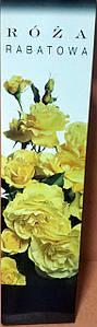 Троянда рабаткова жовта 1шт