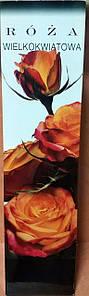 Троянда великоквіткова оранжева з рожевим 1шт