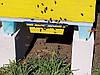 Дно пластиковое, сетчатое с пыльцесборником, на 10-ти рамочный улей, фото 8