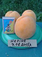 Саженцы персика Нерине (США)