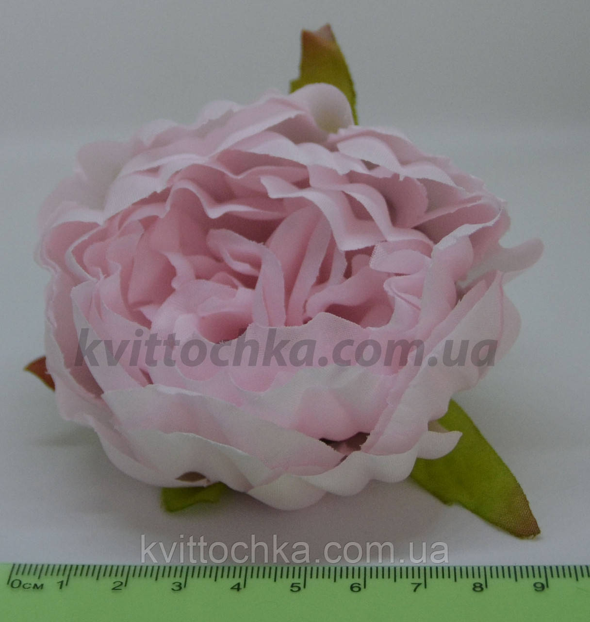 Голова цветка  пиона ,цена указа за 1 шт,диаметр цветка 10см