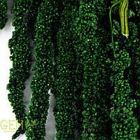 Амарант зеленый темный, фото 1