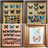 Картины из бабочек
