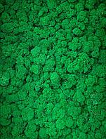 Скандинавский мох ягель Dark Green, фото 1
