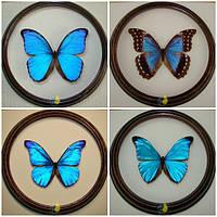 """Набор бабочек в рамках """"Blue Morpho"""""""