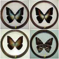 """Набор бабочек в рамках """"Morpho"""""""