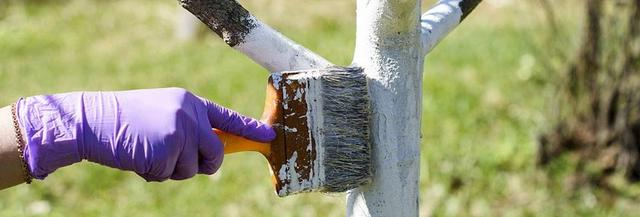 Как защитить деревья от весенних солнечных ожогов