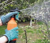 Первая обработка сада весной. Проводим профилактическую обработку растений