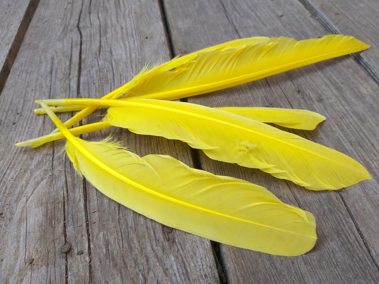 Пір'я жовте для декору, 5 шт/уп., розмір 20-30 см., 30 грн.