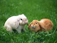 Для откорма кролей (травяная мука 10%) от 2 до 4 месяцев