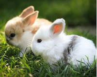 Для крольчат при отъеме и лактирующих крольчих