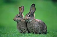Для откорма кролей (травяная мука 15%) от 2 до 4 месяцев